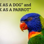 Q&A: 'Sick as a dog' and 'sick as a parrot'