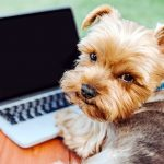 AWC team share their useful tips for working from home