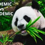 Q&A: Epidemic vs pandemic