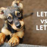 Q&A: Lets vs Let's