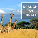 Q&A: Draught vs draft