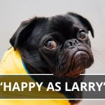 Q&A: Happy as Larry