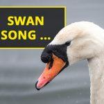 Q&A: Swan song